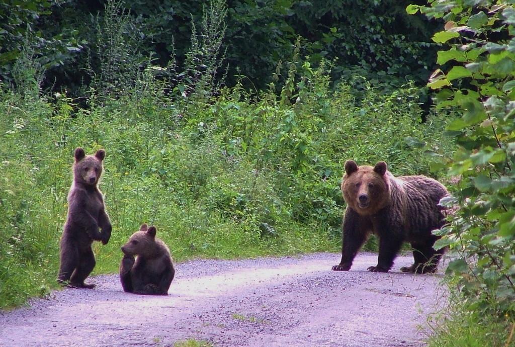 In Mala Fatra geht es der Familie Bär gut!