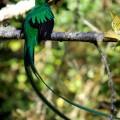 ... Heimat des Göttervogels Quetzal