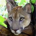 Augen auf im Corcovado-Nationalpark - auch Pumas sind hier beheimatet