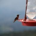 Costa Rica ist ein Paradies für Vogelkundler