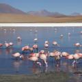 Flamingos in der Lagune Canapa