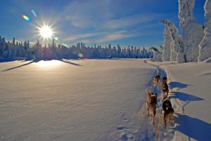 Mit Huskys den Winter nördlich des Polarkreises erleben