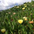 Blumenteppich am Wegesrand.