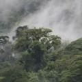 Mystisch: Nebelschwaden am Cerro de la Muerte ...