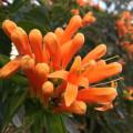 Blütenpracht im Frühling.