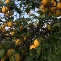 Salina, die grünste der Liparischen Inseln.