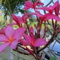 Exotische Blüten in Kenting