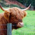 """Spezielle """"Wanderbekanntschaft"""" in Schottland"""