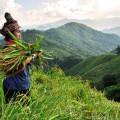 2 Tage Trekkingerlebnis im bergigen Nam-Ha-Nationalreservat