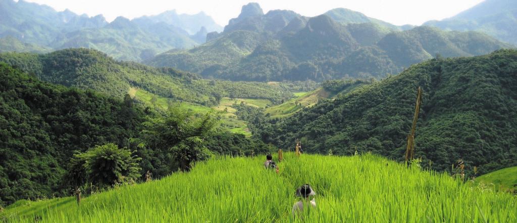 Der unberührten laotischen Natur ganz nah – bei Ihrer Dschungelübernachtung
