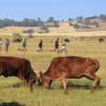 Training auf einer Viehweide in Debark (auf 2850 m Höhe)