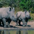 Auf Safari im Krüger-Nationalpark