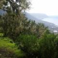 Grüne Wälder auf El Hierro