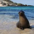 Einmal im Leben mit Seerobben schwimmen