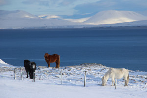 Island - Winter