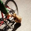 Vergnügliche Begegnungen während einer Radtour auf Rottnest Island