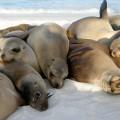 Auf Galapagos ist man als Besucher in der Unterzahl