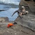 Urzeitlich anmutende Tierwelt