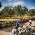 Unter schattenspenden Olivenhainen ins Hinterland