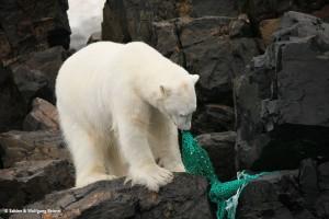 Eisbären © Sabine & Wolfgang Beimel