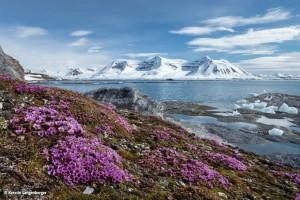 Bunt blühende Tundra © Kerstin Langenberger