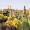 Kraterlandschaften und Kakteenblumen auf Lanzarote