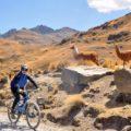 Per Bike durch die Anden mit ihren typischen Bewohnern ...
