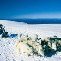 Hundeschlittenfahrt auf dem Lyngsmarksbraen-Gletscher (optional)
