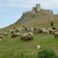 Weite Sicht von der Burgruine Enisala