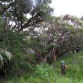 An den Hängen des Ngorongoro-Kraters