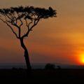 Typisch: die bildgewaltigen Sonnenuntergänge der Serengeti