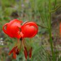 Ein großer Teil der Baikal-Pflanzenwelt ist nur hier heimisch