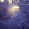 Strahlende Winterlandschaft