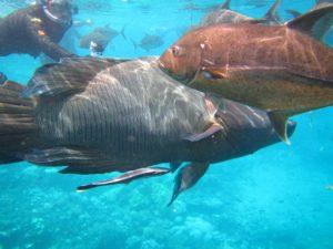 Weltberühmt: das Great Barrier Reef und seine bunten Bewohner