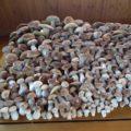 Der Traum eines Pilzsammlers
