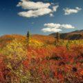 Erleben Sie den Yukon zu einer der schönsten Zeiten des Jahres – im Indian Summer!