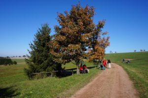 Der Weg führt durch Wald und Feld