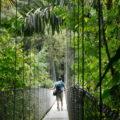 Hängebrücken in Costa Rica