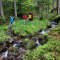Kleine Flüsse und Bäche durchziehen die Wälder.