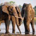 Afrika ohne Safari? Das geht natürlich nicht