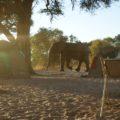 Zelten in Botswana ist ein wirklich unbeschreibliches Erlebnis.