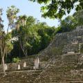 Calakmul Pyramide (UNESCO)