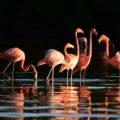 Flamingos im Naturschutzgebiet von Rio Lagartos