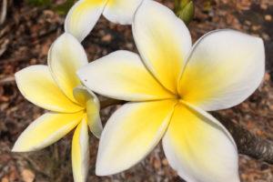 """Nach Big Island geht es weiter nach Kauai – die """"Garteninsel"""" ist ein wahres Natur- und Wanderparadies"""