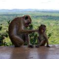 Mutterliebe am Sigiriya-Felsen