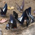 Schmetterlingssichtung während unserer Wanderung