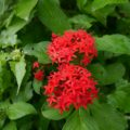 Farbenfrohe, üppige Vegetation im Tropenparadies Sri Lanka