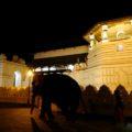Elefantenbesuch am Heiligen Zahntempel in Kandy