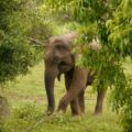 Schüchtern? Safaribeobachtung auf Sri Lanka