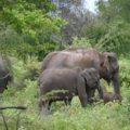 Auf Safari im Udawalawe-NP, Sri Lanka